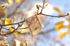 Nota de dólar cinco que adere-se a um ramo com folhas de outono fotografia de stock