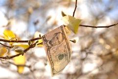 Nota de dólar cinco que adere-se a um ramo com folhas de outono e flores em botão imagens de stock royalty free