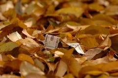 Nota de dólar cinco que encontra-se entre uma camada de folhas caídas imagens de stock