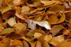 A nota de dólar cinco que encontra-se entre uma camada de folhas caídas vê de cima de imagem de stock