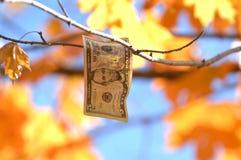 Nota de dólar cinco que pendura como uma folha de uma árvore fotografia de stock royalty free