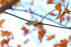 Nota de dólar cinco que pendura de um ramo de árvore no outono imagens de stock royalty free