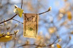 Nota de dólar cinco que pendura de um ramo de árvore no outono com botões e céu no fundo fotos de stock