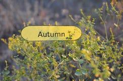 Nota de papel con otoño de la palabra en las ramas de una planta verde foto de archivo libre de regalías