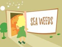 Nota di scrittura che mostra le erbacce del mare Foto di affari che montra le grandi alghe che crescono nella flora delle piante  illustrazione vettoriale