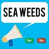 Nota di scrittura che mostra le erbacce del mare Foto di affari che montra le grandi alghe che crescono nella flora delle piante  royalty illustrazione gratis