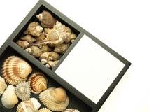 Nota die met kammossel en overzeese shells wordt verfraaid Royalty-vrije Stock Afbeelding