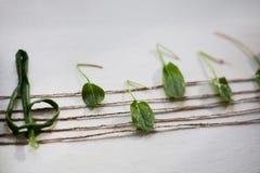 Nota musical de las hojas verdes, fondo blanco Fotos de archivo