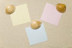 Nota's met zeeschelpen op zand Royalty-vrije Stock Foto's