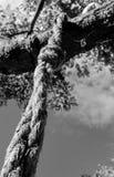 Nota van de Isoled de zware die kabel op een boom wordt gezien, die als een deel van een beul` s lus kijken royalty-vrije stock afbeelding