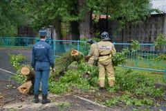 Notarbeitskräfte klären die Straße von gefallen nach einem Sturm der alte Baum St Petersburg Lizenzfreie Stockfotografie