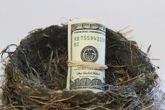 Notas de dólar em um ninho do pássaro Fotografia de Stock Royalty Free