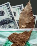 notas e folha de louro de Cem-dólar Imagens de Stock