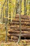 Notation commandée à la forêt de Bialowieza photographie stock libre de droits
