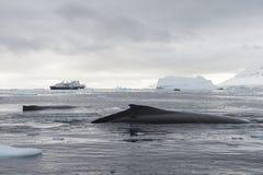 Notation de baleine de bosse image stock