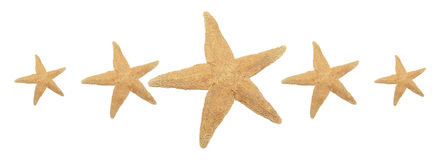Notation de cinq étoiles de mer image stock