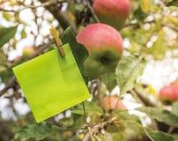 Notatka w jabłoni Obrazy Royalty Free