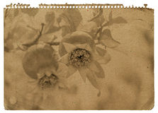 Notatnika papier zdjęcie royalty free