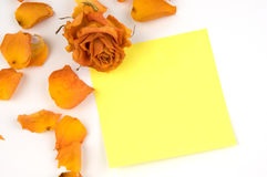 Note. Empty yellow note paper, orange rose bud and petals isolated over white Royalty Free Stock Image