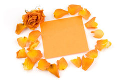 Note. Empty orange note paper, rose bud and petals isolated over white Stock Photos
