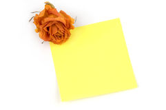 Note. Empty yellow note paper and orange rose bud isolated over white Royalty Free Stock Photos