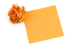 Note. Empty orange note paper and rose bud isolated over white Royalty Free Stock Photography