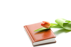 Note book and a tulip Royalty Free Stock Photography