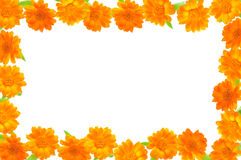 Note card with orange flowers. Royalty Free Stock Photos