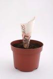 Note d'argent dans le bac Image stock