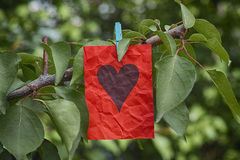 Note de papier rouge avec la forme de coeur accrochant sur un arbre Image stock