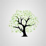 Note di verde del whith dell'albero Fotografia Stock Libera da Diritti