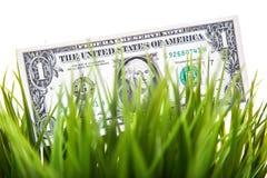 Note du dollar dans l'herbe Images libres de droits