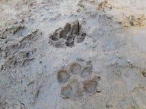 Note e fango del piede del cane Fotografie Stock Libere da Diritti