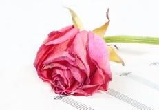 Note e fiore Immagine Stock