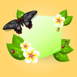 Note with leaves, drops of dew, ladybird, butterfly. Royalty Free Stock Photo
