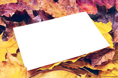 Note paper and maple leaves Royalty Free Stock Images