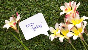 Note in shape of a chat bubble, with words Hello Spring! and flowers . Note in shape of a chat bubble, with words Hello Spring! and flowers on green grass Royalty Free Stock Photos