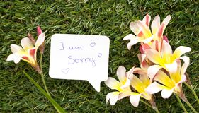 Note in shape of a chat bubble, with words I am sorry!. And flowers on green grass Royalty Free Stock Photography