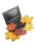 Notebook and autumn leaves Stock Image