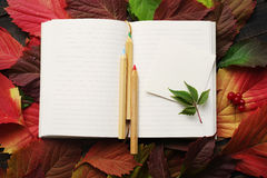 Notebook with blank pages and a wooden color pencils on autumn leaves Royalty Free Stock Images