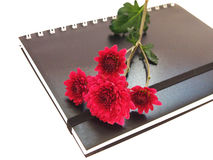Notebook. Can make you not forget important Stock Images