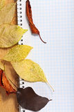 Notebook with colored pencils and autumn leaves. Royalty Free Stock Photography