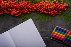 Notebook, colored pencils and bunch of rowan on a table Stock Image
