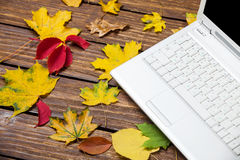Notebook and leafs Royalty Free Stock Photos