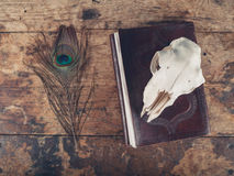 Notebook with peacock feather and sheep skull Stock Photo