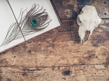 Notebook with peacock feather and sheep skull Royalty Free Stock Photos