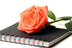 Notebook with rose on white background Stock Photo