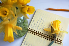 Notebook with spanish words and yellow daffodils Royalty Free Stock Photography