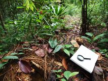 Notebook, tropical rainforest background Stock Photo