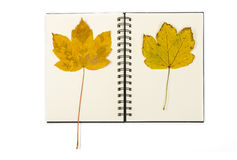 Notebook with two autumn leaves. Ringed notepad with two maple leaves Stock Photo